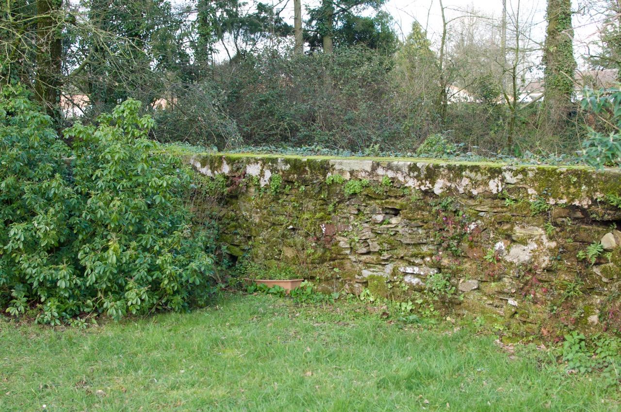 Mur et verdure