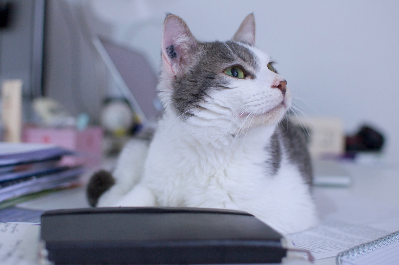Chat couché sur le bureau